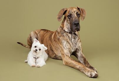 Dogs_2